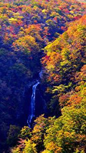 Фотография Япония Леса Водопады Осенние Zao Onsen Yamagata Природа