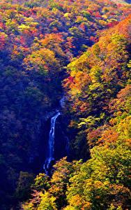 Фотография Япония Леса Водопады Осенние Zao Onsen Yamagata