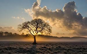 Обои Рассвет и закат Тумана Облако Дерева Траве Природа