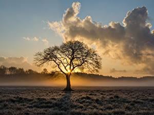 Обои Рассветы и закаты Туман Облака Деревья Трава Природа
