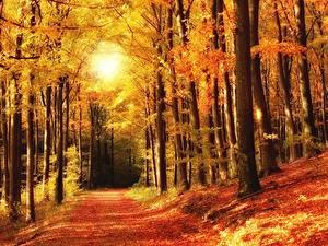 Картинка Осень Леса Парки Деревьев