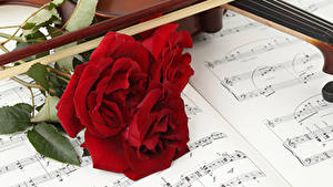 Фотография Розы Ноты Красный Втроем