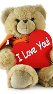 Фотографии День святого Валентина Мишки Любовь Белом фоне Сердце Инглийские