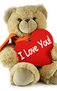 Фотографии День святого Валентина Плюшевый мишка Любовь Белым фоном Сердца Английская