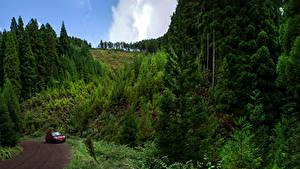 Картинки Португалия Дороги Леса Sao Miguel Azores