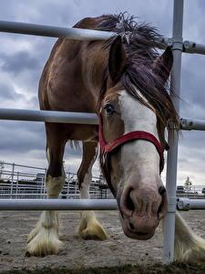 Фотография Лошадь Загон Забор животное