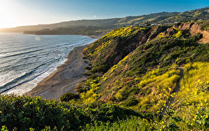 Картинка США Берег Океан Калифорнии Мох Скала Природа