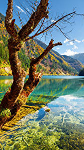 Фотографии Цзючжайгоу парк Китай Парки Осень Река Горы Пейзаж Ствол дерева Деревья