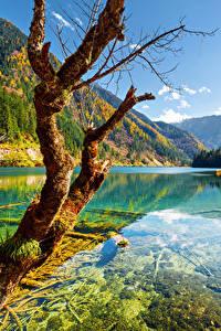 Фотографии Цзючжайгоу парк Китай Парк Осень Реки Горы Пейзаж Ствол дерева Деревья