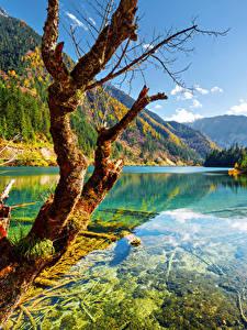 Фотографии Цзючжайгоу парк Китай Парки Осень Реки Горы Пейзаж Ствол дерева Деревья