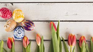 Фотографии Праздники Пасха Тюльпаны Доски Яйца Дизайна цветок