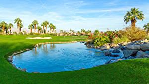 Фотография Штаты Парки Пруд Камень Калифорния Газон Пальмы Palm Desert Природа