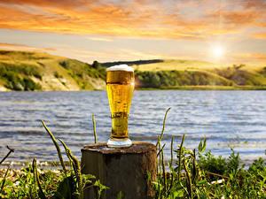 Фотография Пиво Пень Стакане Пене Пища