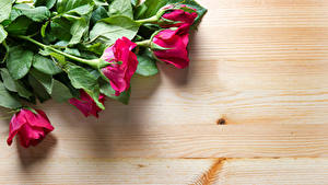 Картинка Розы Крупным планом Доски Красных Цветы