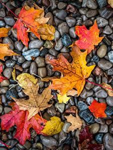 Картинки Камни Осенние Листва Мокрые