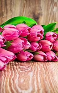 Фото Тюльпаны Розовая Цветы