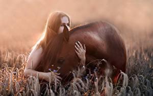 Фотография Лошадь Животные Девушки