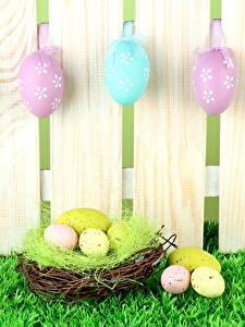 Фото Праздники Пасха Ограда Доски Яйцами Гнездо Траве