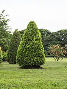 Картинки Таиланд Парк Газон Дерева Suan Luang Rama public park Природа