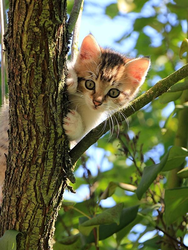 Картинка котенок Кошки Листья ветка смотрит Животные 600x800 для мобильного телефона котят Котята котенка кот коты кошка лист Листва ветвь Ветки на ветке Взгляд смотрят животное