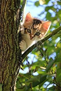 Картинка Кошки Ветка Листья Котенок Смотрит
