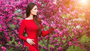 Обои Цветущие деревья Шатенка Платье молодые женщины