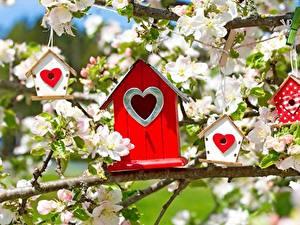 Картинки Цветущие деревья Ветвь Сердце Malus Nest box Цветы