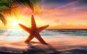 Обои Морские звезды Море Вечер Рассвет и закат Лето Песок Пляж
