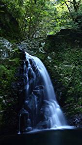 Картинка Водопады Скале Мха Природа