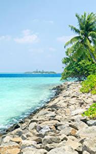 Обои Мальдивы Берег Тропики Камни Пальмы