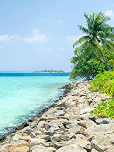 Обои Мальдивы Берег Тропики Камни Пальма Природа