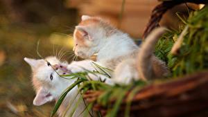 Фотографии Коты Котенка Две Животные
