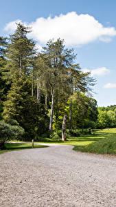 Фото Великобритания Парки Дороги Деревья Westonbirt Arboretum