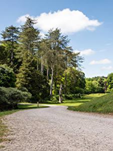 Фото Великобритания Парки Дороги Деревья Westonbirt Arboretum Природа
