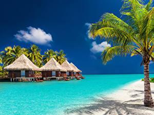 Фотография Мальдивы Тропики Берег Бунгало Пальмы
