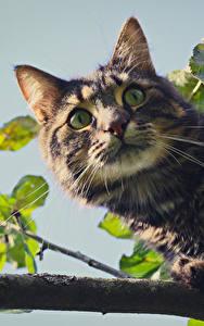 Картинки Кошка Взгляд На ветке Усы Вибриссы животное