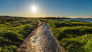 Картинка Штаты Берег Рассвет и закат Калифорнии Траве Солнца Huntington Beach Природа