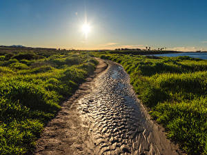 Картинка Штаты Берег Рассвет и закат Калифорнии Траве Солнца Huntington Beach