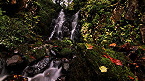 Картинки Япония Водопады Камни Скала Мох Листва Fudotaki Falls Katsuyama Природа