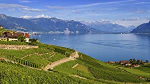Фото Швейцария Горы Озеро Дома Поля Lavaux region Vaud Природа