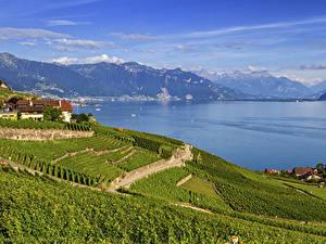 Фото Швейцария Горы Озеро Дома Поля Lavaux region Vaud
