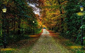Фотография Нидерланды Осень Парки Деревья Уличные фонари Driebergen Utrecht