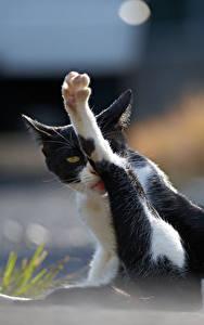 Картинки Кошки Лап Животные