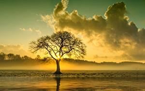 Фотография Рассветы и закаты Облака Деревья Тумана
