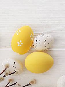 Обои Праздники Пасха Доски Яйцо На ветке