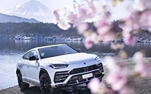 Фотография Lamborghini Белый Urus 2018 автомобиль