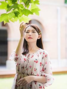 Фотография Азиатки Листва Рука Платья Шатенки девушка