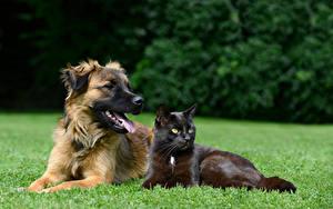 Обои Собака Кошки Вдвоем Взгляд Трава животное
