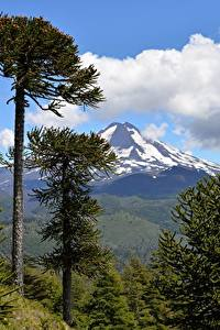 Обои Чили Горы Парк Пейзаж Деревья Conguillío National Park, Andes, Araucanía