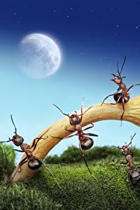 Картинки Муравьи Грибы природа Луна Мха lolita777 животное